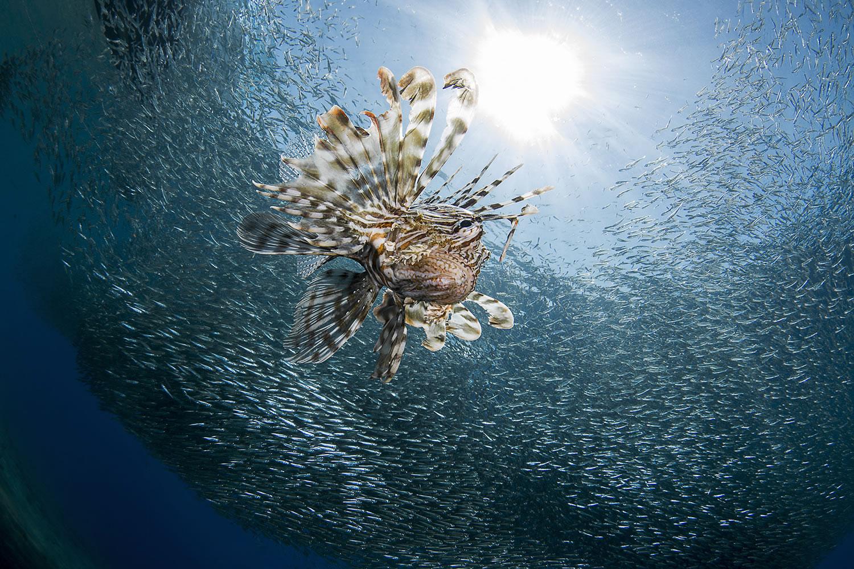 WORLD SHOOTOUT Underwater Photo Grand Prix